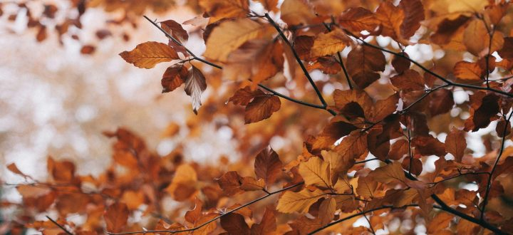 Visit Essex this Autumn